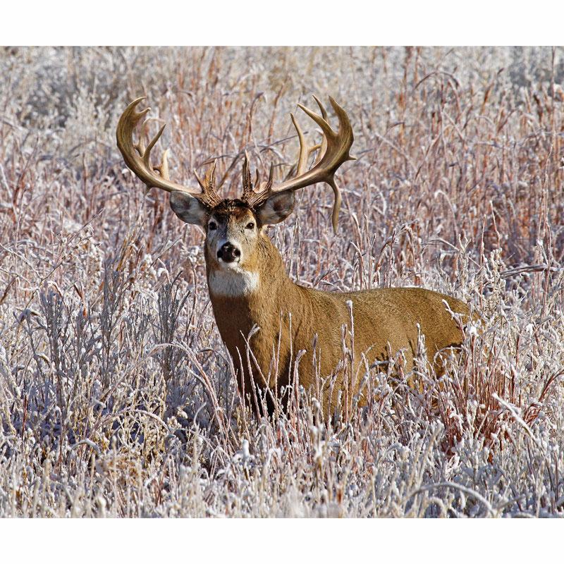 King's Camo - White Tail Deer Digitally Printed Panel