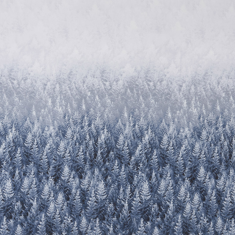 Snowscape - Forest Trees Double Border Ice Yardage
