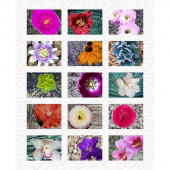 Homeward - Flower Garden Multi Digitally Printed Panel