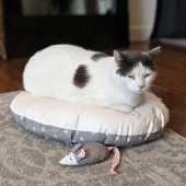 Cut Sew Create - Kitty Bed and Toy Kit