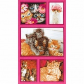 Cat Crazy - Multi Panel