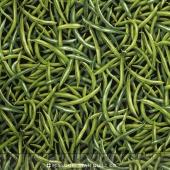 Farmer John's Garden Party - Green Bean Green Yardage