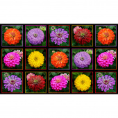 Flowers - Zinnia  Blocks Black Panel