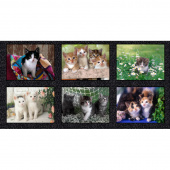Somebody to Love - Kittens Multi Digitally Printed Panel